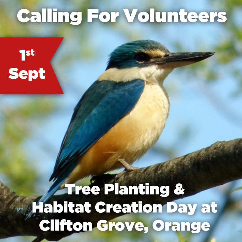 Tree Planting Day Orange 1 Sept