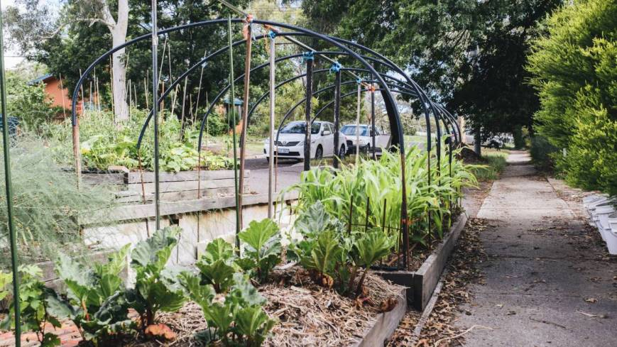 Canberrans can now grow plants on nature strips